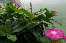 Flowers, wasp and water