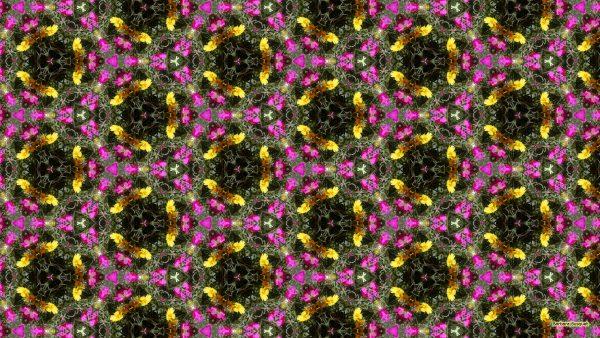 Pattern wallpaper Portulaca grandiflora flowers