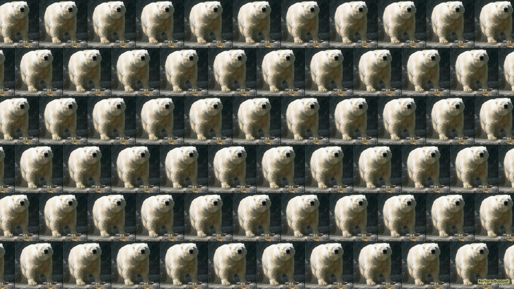 Polar bears tiles wallpaper