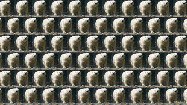 Polar bears tiles wallpaper
