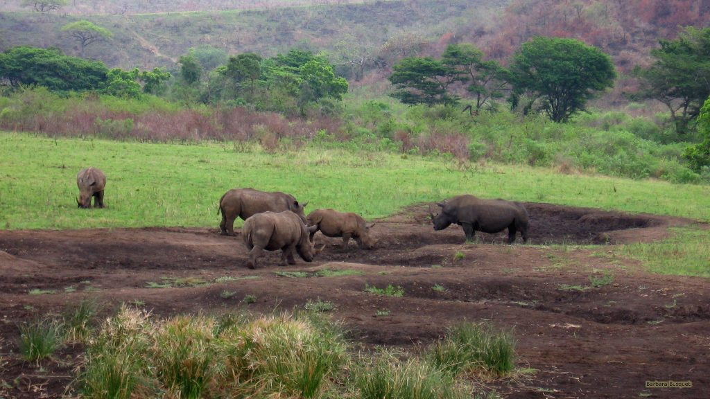 South Africa HD wallpaper wild rhinos