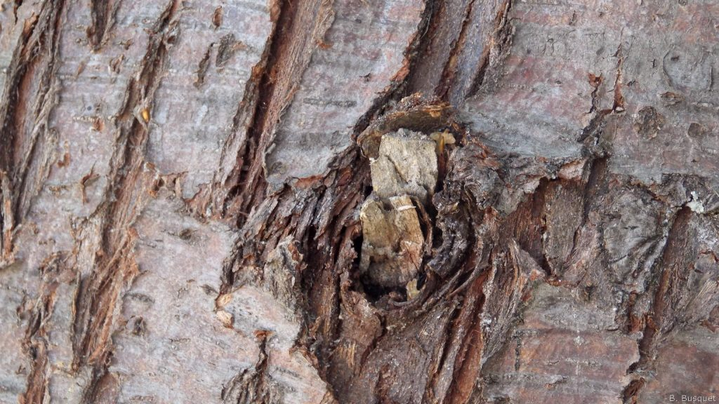 Tree bark wallpaper