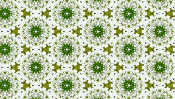 White flowers pattern wallpaper