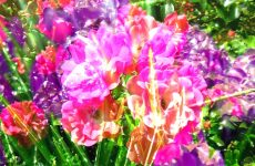 Abstract flowers and grass
