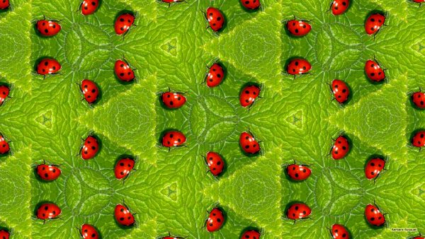 Pattern with green leaves with red ladybugs