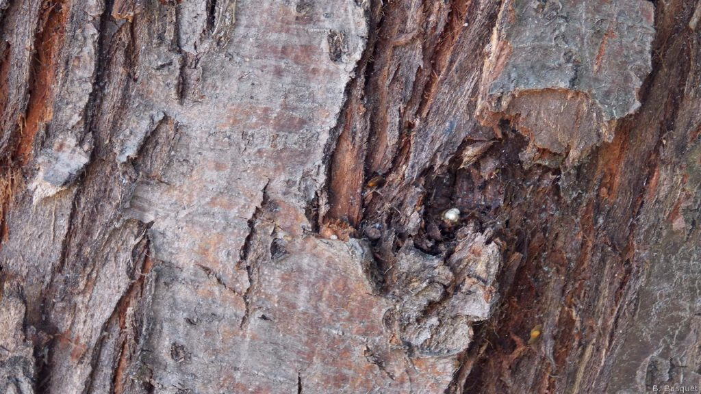 hd wallpaper with bark of a tree