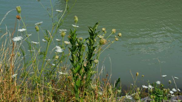 Wallpaper flowers on waterside