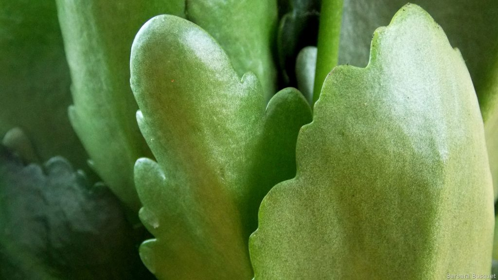 Green wallpaper with Succulent plant