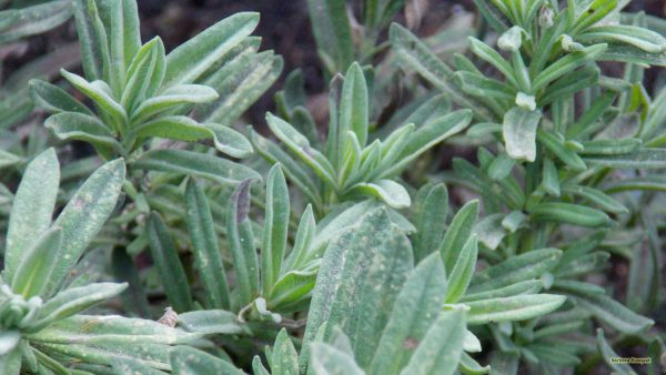 Wallpaper with a fat plant with light green leaves