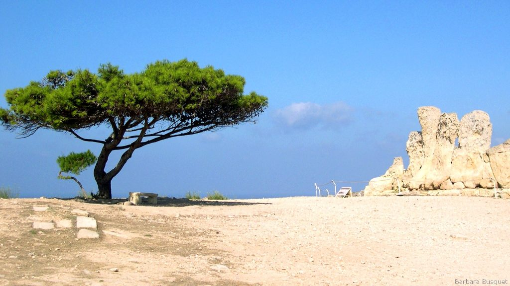 Nature wallpaper tree in desert of Malta