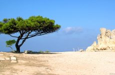 Tree in Malta desert