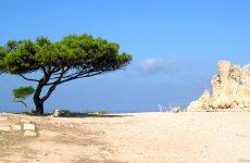 Tree in Malta desert