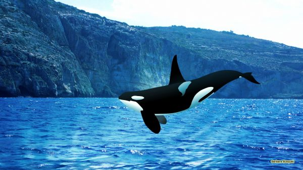 HD wallpaper Orca jumping in ocean