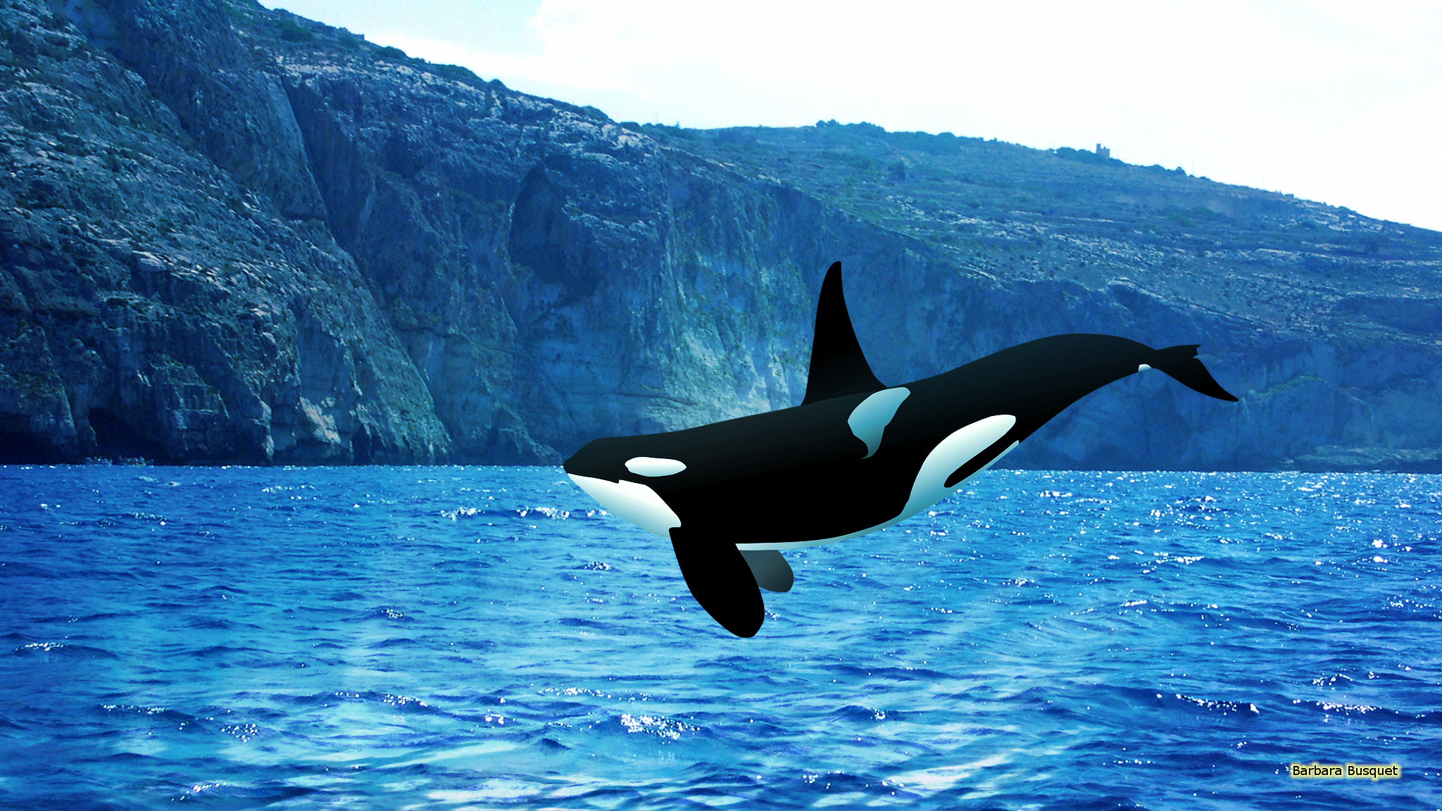 Orca Wallpapers - Barbaras HD Wallpapers