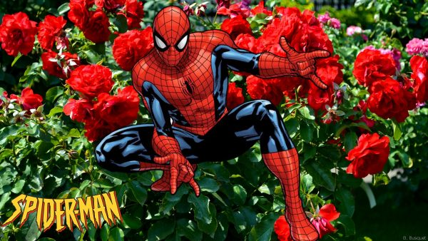 Wallpaper Spiderman with red roses