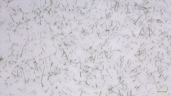 HD background gras with snow