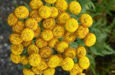 Yellow Golden flowers