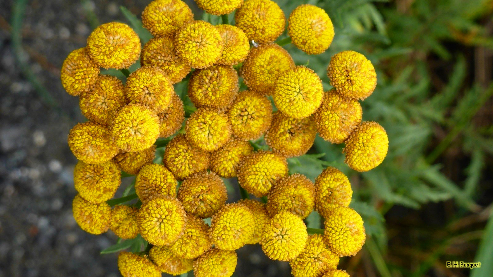 Yellow golden flowers barbaras hd wallpapers hd wallpaper orange golden flowers mightylinksfo
