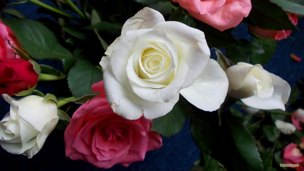 HD wallpaper mixed roses