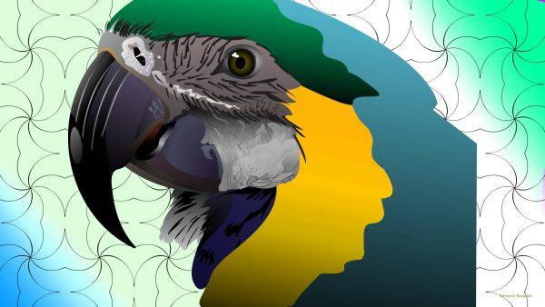 HD wallpaper parrot head