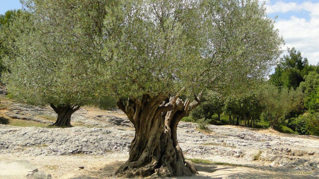 HD wallpaper tree on rocky desert ground