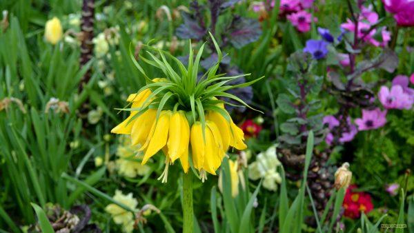 Flower wallpaper yellow flower in spring