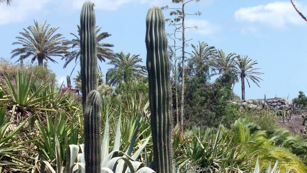 Garden with cactuses on Lanzarote