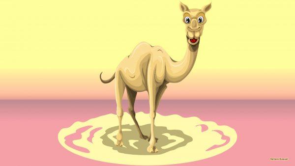 HD wallpaper camel in desert