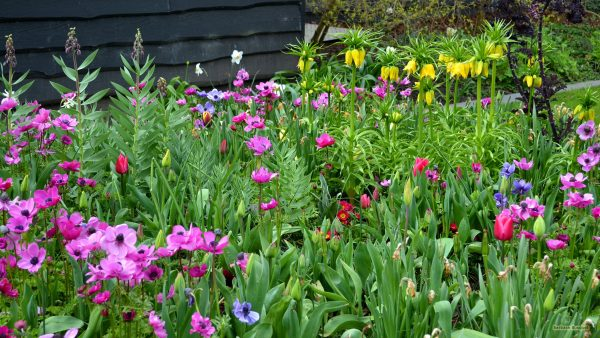 HD wallpaper garden with flowers
