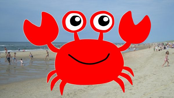 HD wallpaper red crab at the beach