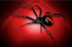 Spider and spiderweb Wallpapers