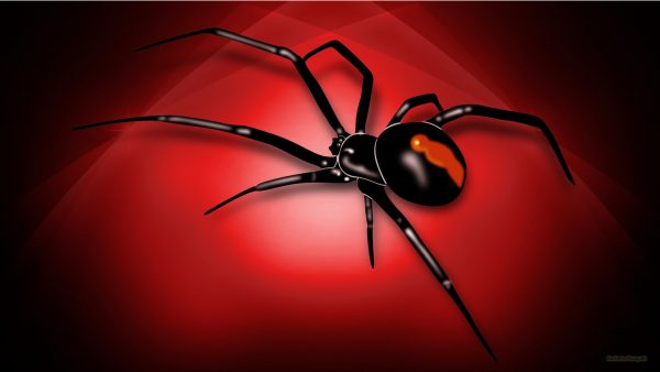 HD wallpaper with red white spider
