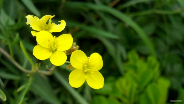 HD wallpaper yellow flowers