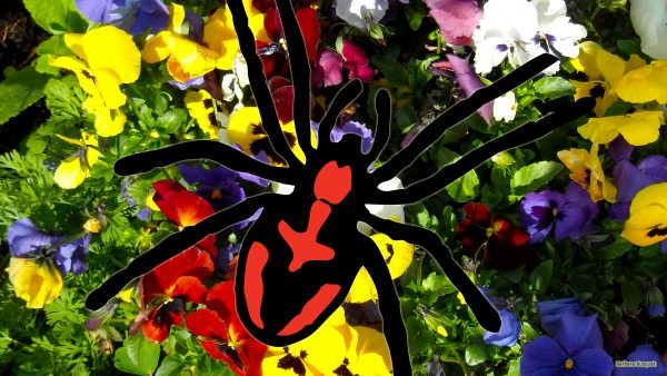 Red black spider and viola flowers
