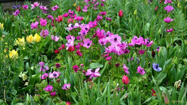 Garden wallpaper pink and yellow flowers