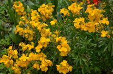 Garden with yellow flowers