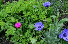 Yard with purple flowers