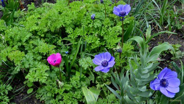 Garden wallpaper with purple flowers