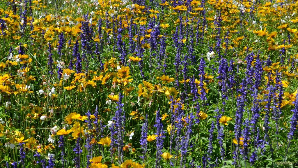 Wallpaper with a field with flowers in several colors.