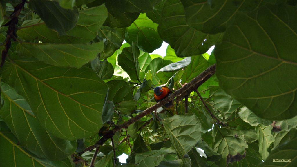 HD wallpaper bird in a tree