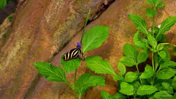 HD wallpaper black yellow butterfly