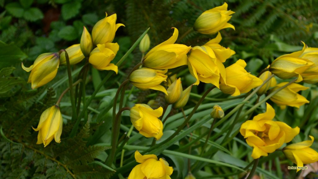 HD wallpaper closed yellow flowers.