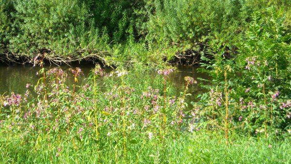 HD wallpaper flowers at river
