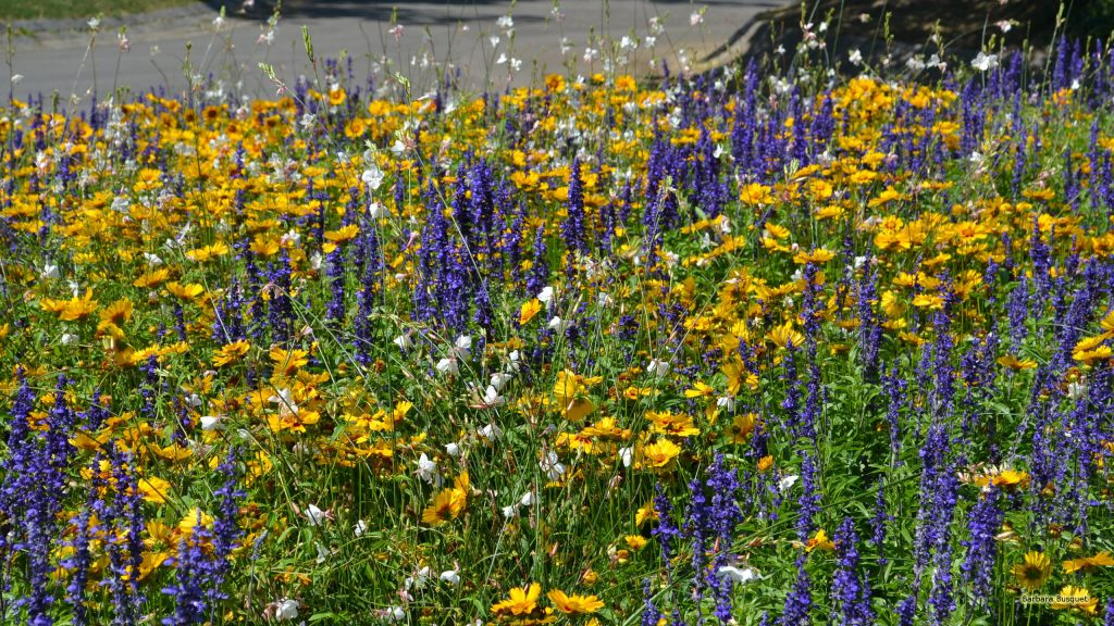 Field with purple and yellow flowers