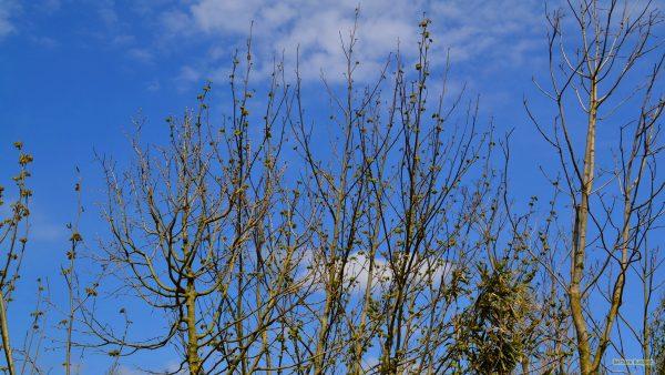 HD wallpaper trees under blue sky