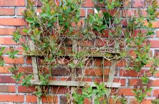Wall with climbing plant