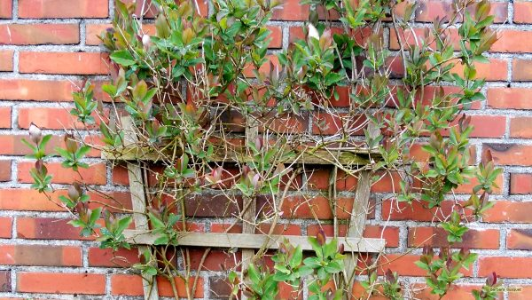 HD wallpaper wall with climbing plant