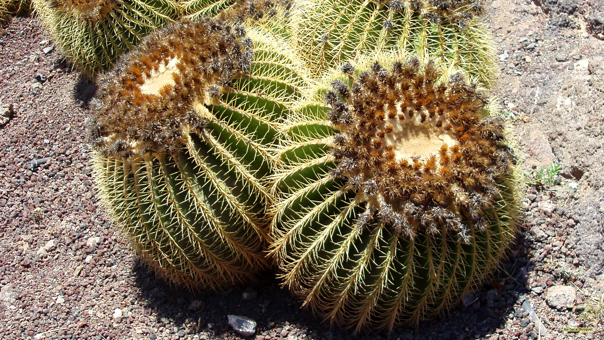 hd cactus wallpapers - photo #39