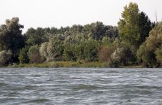 River bank with trees