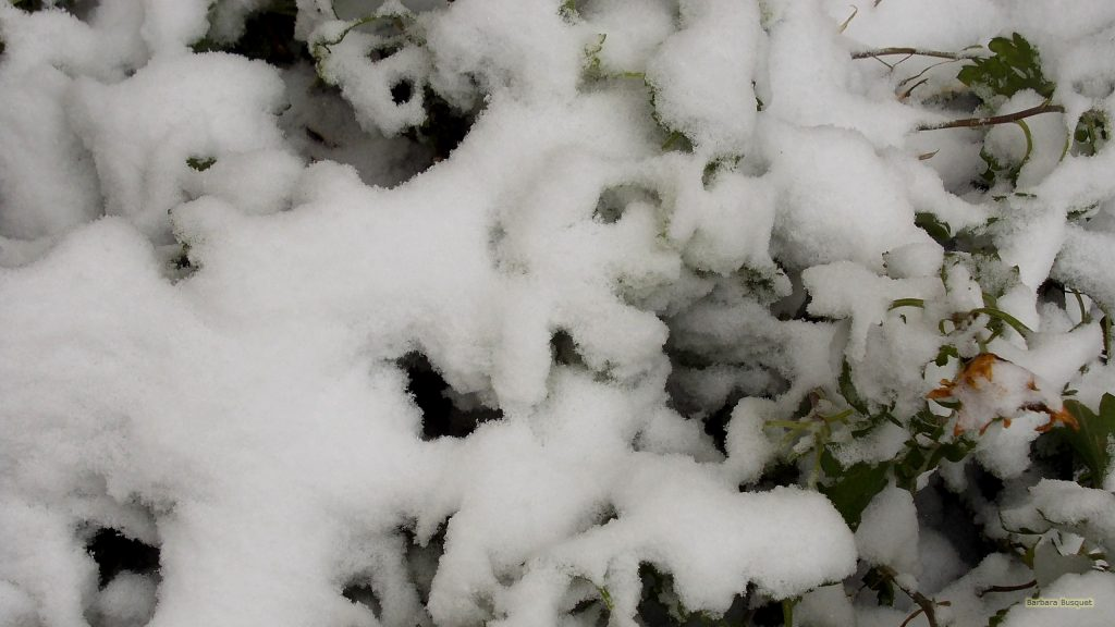 Snow wallpaper with bush with snow